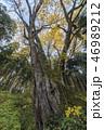 富山の森大玉生のカツラ 46989212