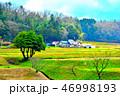 稲 水田 米の写真 46998193