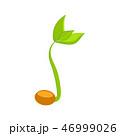 双葉 芽生え 新芽のイラスト 46999026