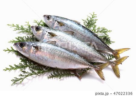 魚 さば 食材 新鮮食材 生魚 海産物 青魚 DHA EPA   47022336
