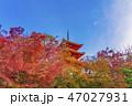 寺社仏閣 清水寺 三重塔の写真 47027931