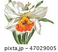 daffodil19112pix7 47029005