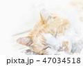 猫 昼寝 寝るのイラスト 47034518