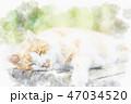 猫 昼寝 野良猫のイラスト 47034520