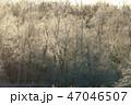 霧氷 冬 木の写真 47046507