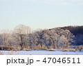 霧氷 冬 木の写真 47046511