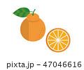 デコポン ベクター 柑橘類のイラスト 47046616