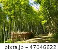 竹柵のある竹林の小径 47046622