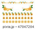 デコポン ベクター 蜜柑のイラスト 47047204