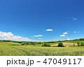 青空 夏 美瑛の写真 47049117