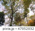 木 木々 樹木の写真 47052032
