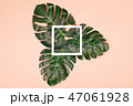 Monstera leaves on pale pink background with frame. 47061928