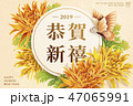 菊科 キク 菊のイラスト 47065991