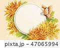 菊科 キク 菊のイラスト 47065994