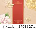 蝶 菊科 キクのイラスト 47066271