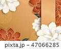 しゃくやく 牡丹 菊科のイラスト 47066285
