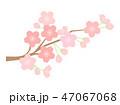 桜 花 植物のイラスト 47067068