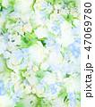 背景-花-春-夏-さわやか 47069780