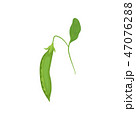 エンドウ豆 グリーンピース サヤのイラスト 47076288