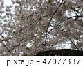 卒業 花 アルコールの写真 47077337