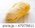 みずみずしい白菜 47079811