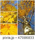 木 木々 樹々の写真 47086833