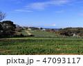 畑 植物 空の写真 47093117