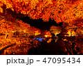 紅葉 ライトアップ 秋の写真 47095434