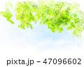 葉 新緑 青空のイラスト 47096602