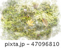 秋のもみじ 落葉 水彩画風 47096810