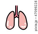 ベクター 健康 内臓のイラスト 47099228