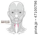 胸骨甲状筋(きょうこつこうじょうきん) 47100796