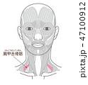 肩甲舌骨筋(けんこうぜっこつきん) 47100912