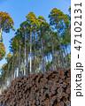 林 木 森林の写真 47102131