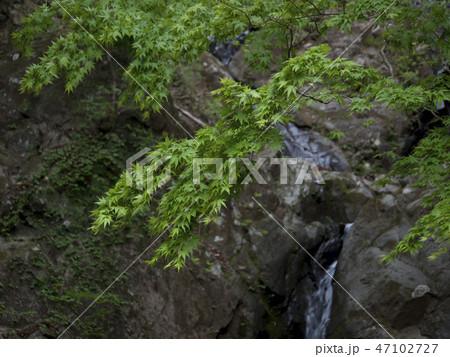 神奈川県 大山の二重滝 47102727