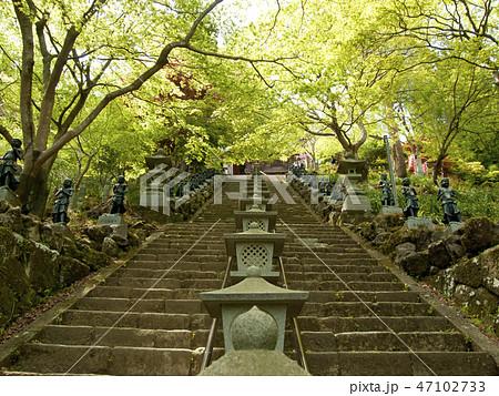 神奈川県 大山寺の石段 47102733