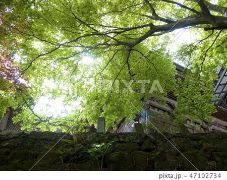 神奈川県 大山寺 47102734