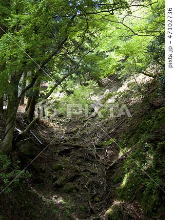 神奈川県 大山の新緑 47102736