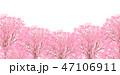 桜 桜並木 春のイラスト 47106911