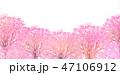 桜 桜並木 春のイラスト 47106912