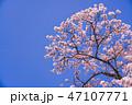 桜 春 青空の写真 47107771