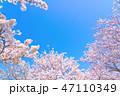 桜の花のフレーム 47110349