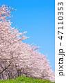桜並木 47110353