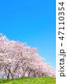 桜並木 47110354