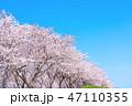 桜並木 47110355