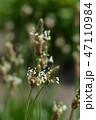 お花 フラワー 咲く花の写真 47110984