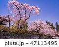 桜 春 枝垂れ桜の写真 47113495