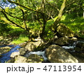 大きな岩の合間を流れる清流 47113954