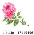 rose19115pix7 47115456