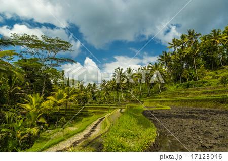 Volcano Bromo is an active crater volcano, Tengger Semeru National Park, East Java, Indonesia. 47123046